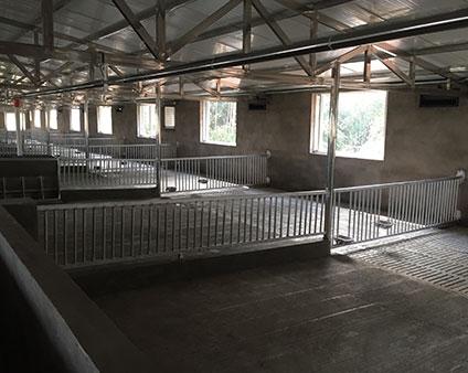 重庆养殖场限位栏